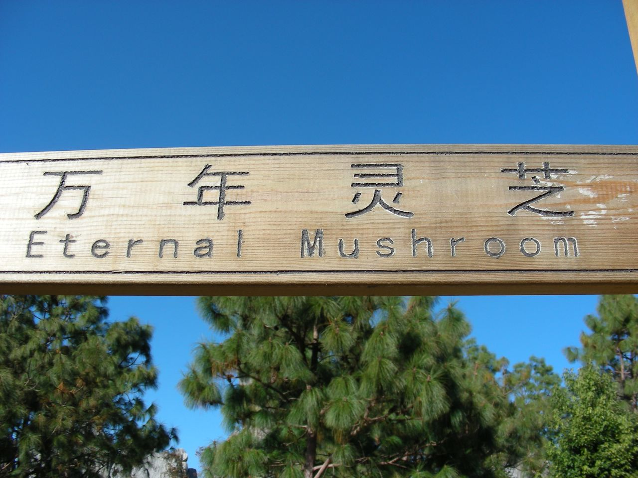 Eternal mushroom