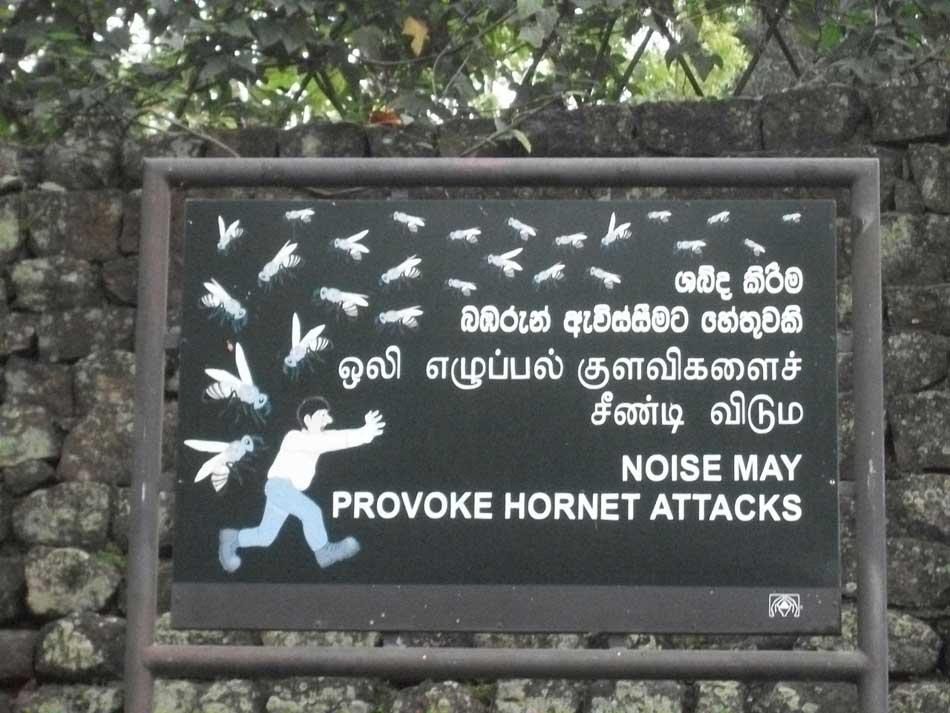 Noise may provoke