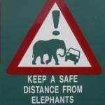 keep a safe distance from elephants