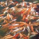 Paquet de poissons