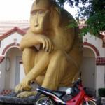 singe doré