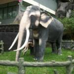 concrete elephant
